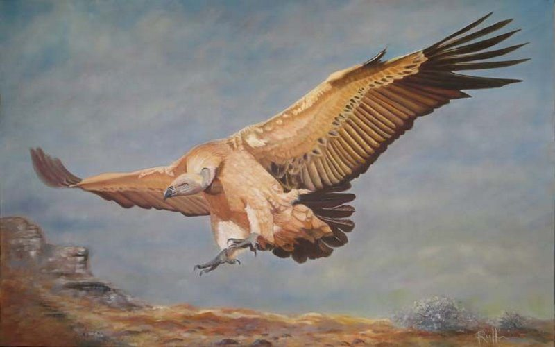 Spiritual Meaning of Vultures - The Secret Message They Have for You