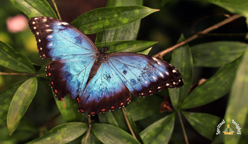 Spiritual Meaning of the Butterfly - The Secret Message They Have for You