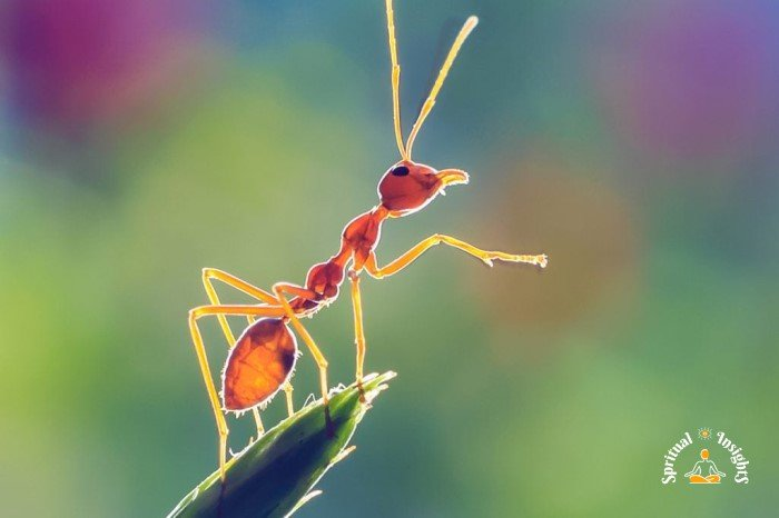 Spiritual Meaning of Ants – The Secret Message They Have