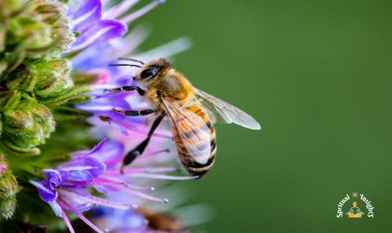 Spiritual Meaning of Bees - The Secret Message They Have for You