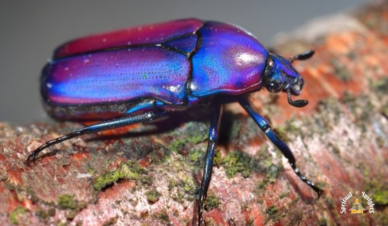 Spiritual Meaning of the Beetle - The Secret Message They Have for You