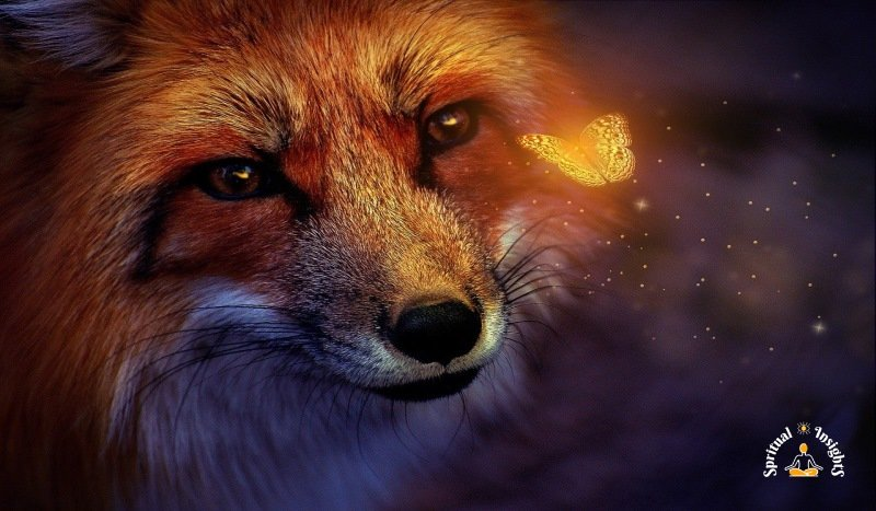 Spiritual Meaning of the Fox - 7 Messages it Has for You