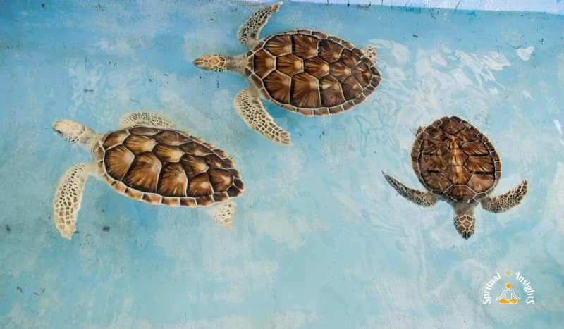 Spiritual Meaning of the Turtle - 7 Benefits of Having a Turtle at Home