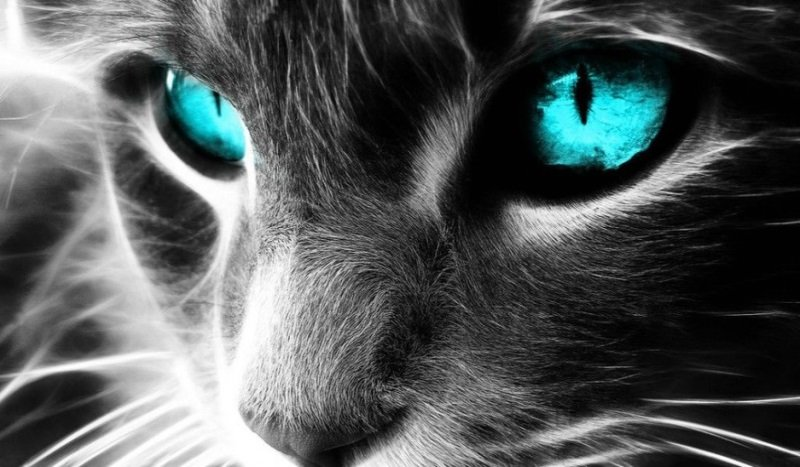 The Spiritual Mission Of Cats And Their Healing Powers