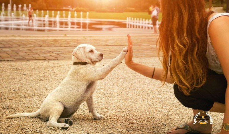 The Spiritual Mission Of Dogs In Our Life