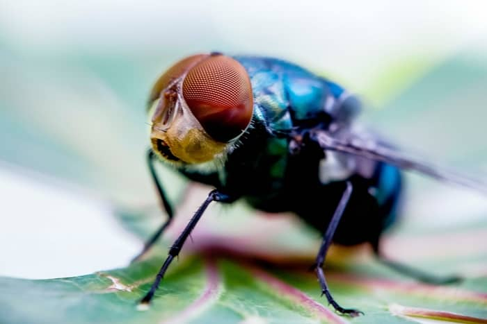 F.A.Q About the Spiritual Meaning of Flies