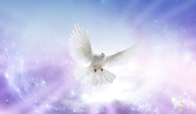 Spiritual Meaning of Doves & Pigeons – The Secret Message They Have for You