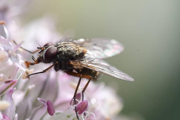 Spiritual Meaning of Flies Surrounding You