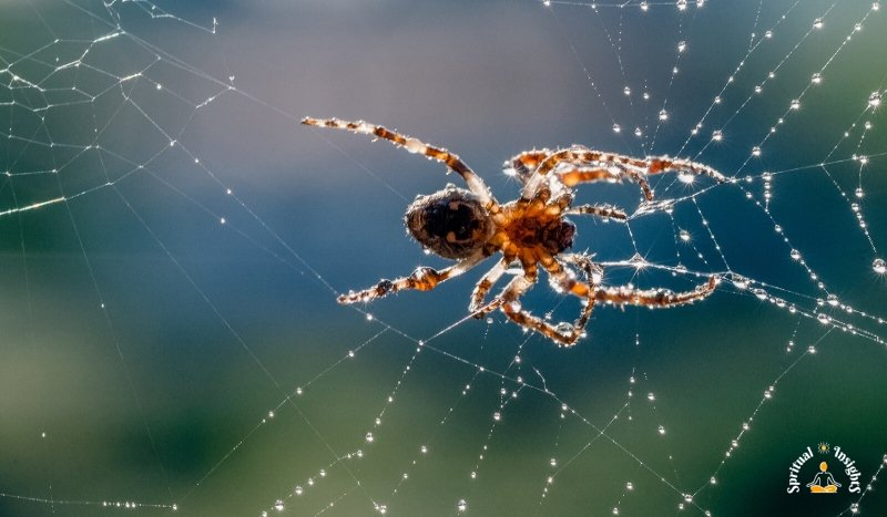 Spiritual Meaning of Spiders - The Secret Message They Have for You