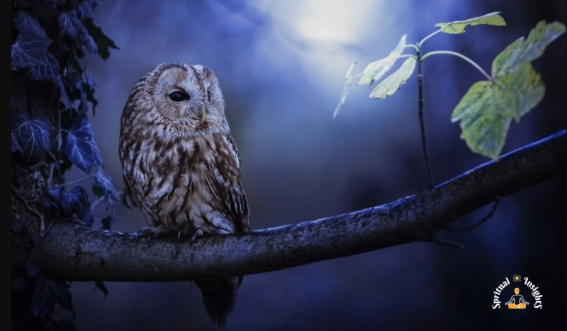 Spiritual Meaning of the Owl – The Secret Message They Have for You