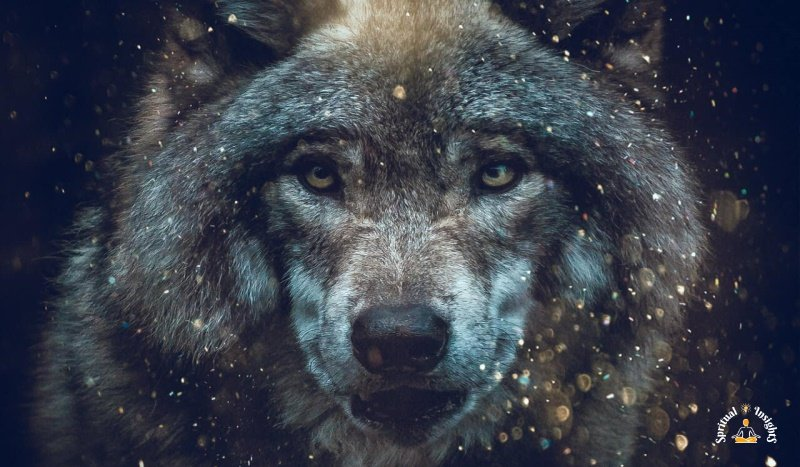 Spiritual Meaning of the Wolf - The Secret Message They Have for You