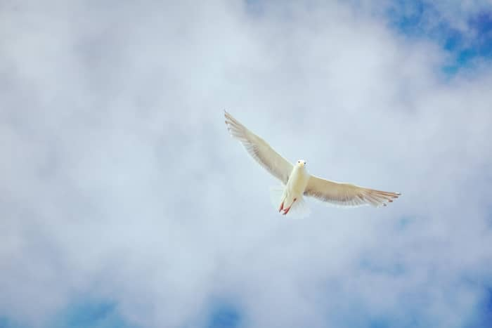 The Spiritual Meaning of Doves and Pigeons