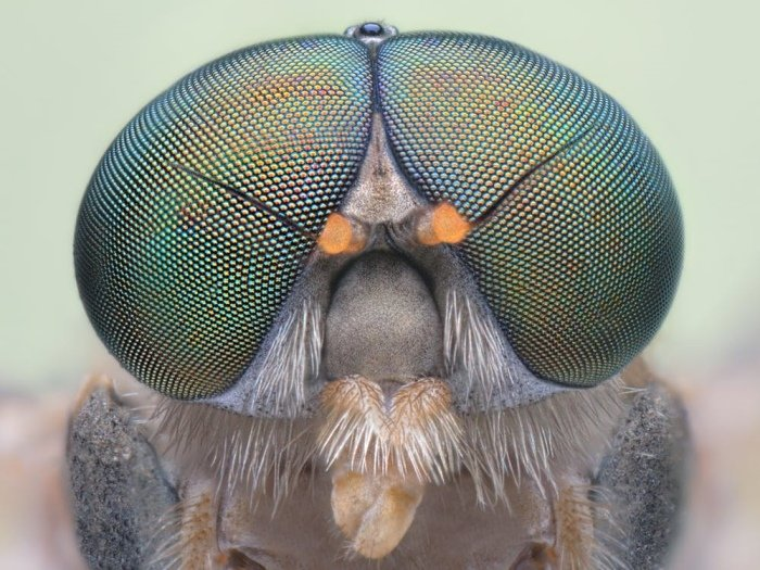The Spiritual Meaning of Flies