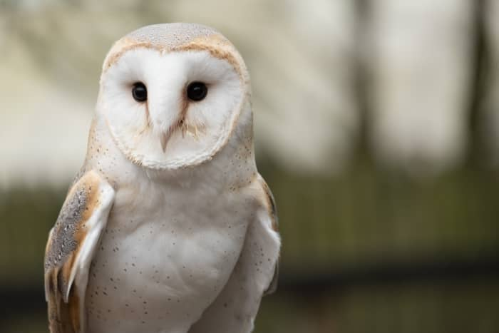 The Spiritual Meaning of the Owls