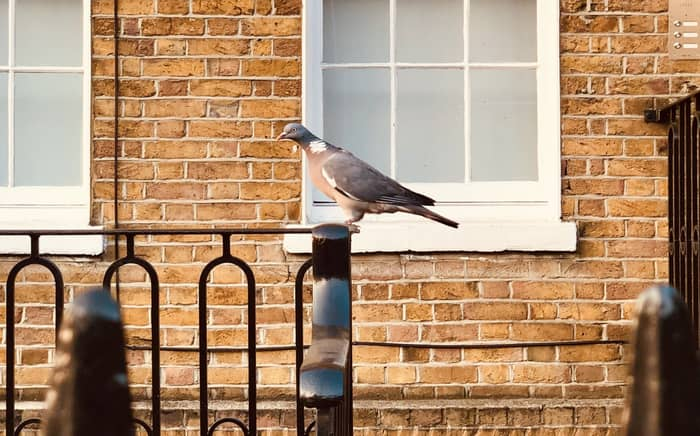 What does it Mean for a Bird to Land on a Window